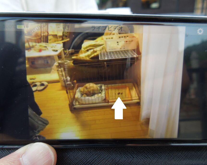 f:id:Ikegamiblog_tokyo:20190517200928j:plain