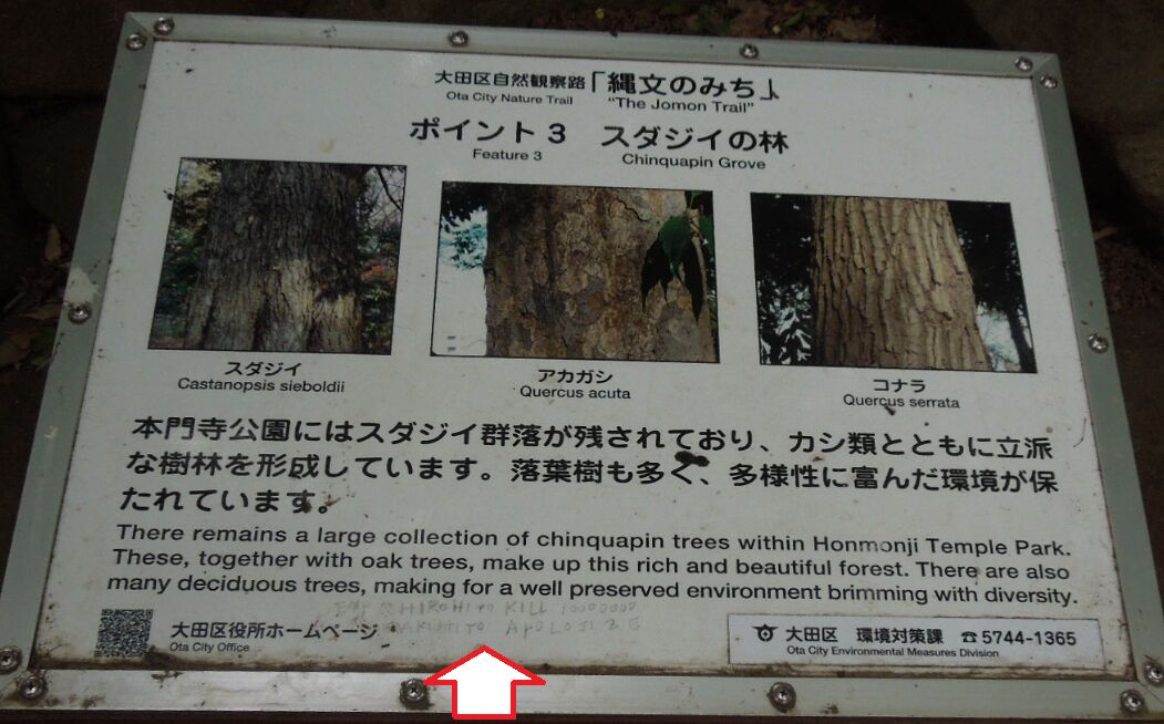 f:id:Ikegamiblog_tokyo:20190525205353j:plain