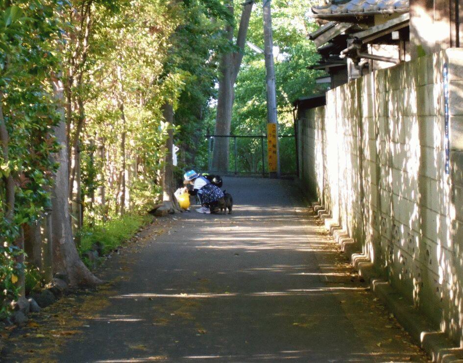 f:id:Ikegamiblog_tokyo:20190526125100j:plain