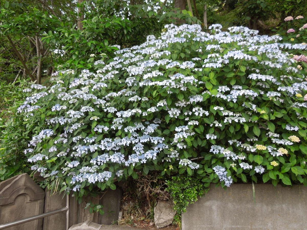 f:id:Ikegamiblog_tokyo:20190602143459j:plain