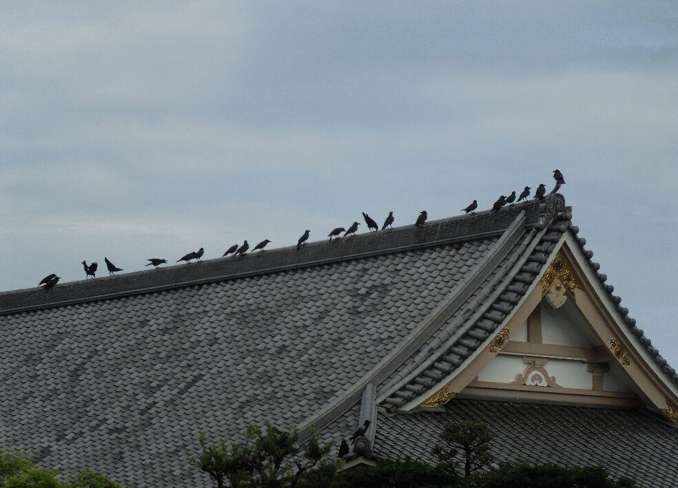 f:id:Ikegamiblog_tokyo:20190623121703j:plain