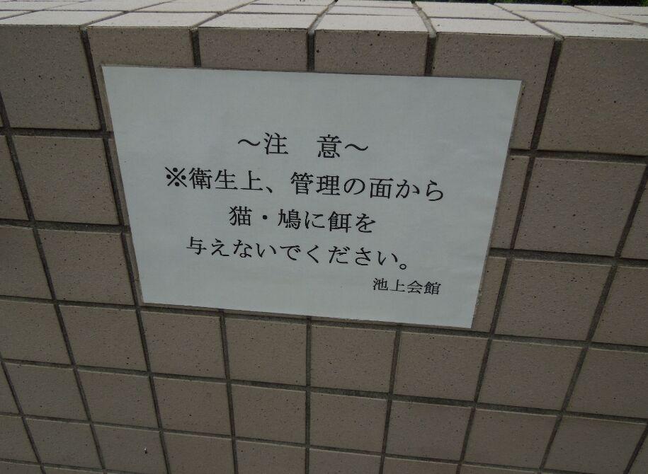 f:id:Ikegamiblog_tokyo:20190623143600j:plain