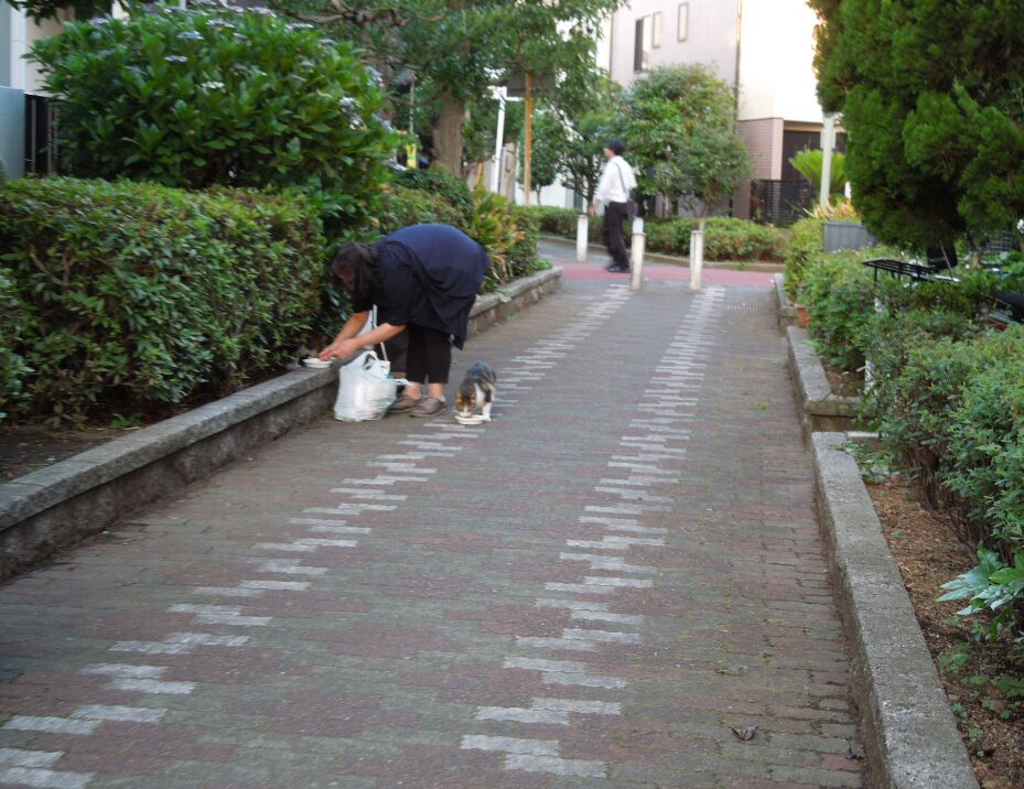 f:id:Ikegamiblog_tokyo:20190625211313j:plain