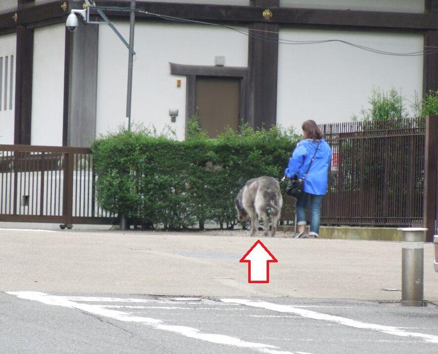 f:id:Ikegamiblog_tokyo:20190707154427j:plain