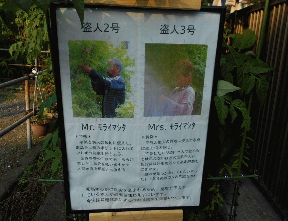 f:id:Ikegamiblog_tokyo:20190804160008j:plain