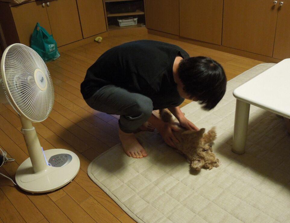 f:id:Ikegamiblog_tokyo:20190820115349j:plain