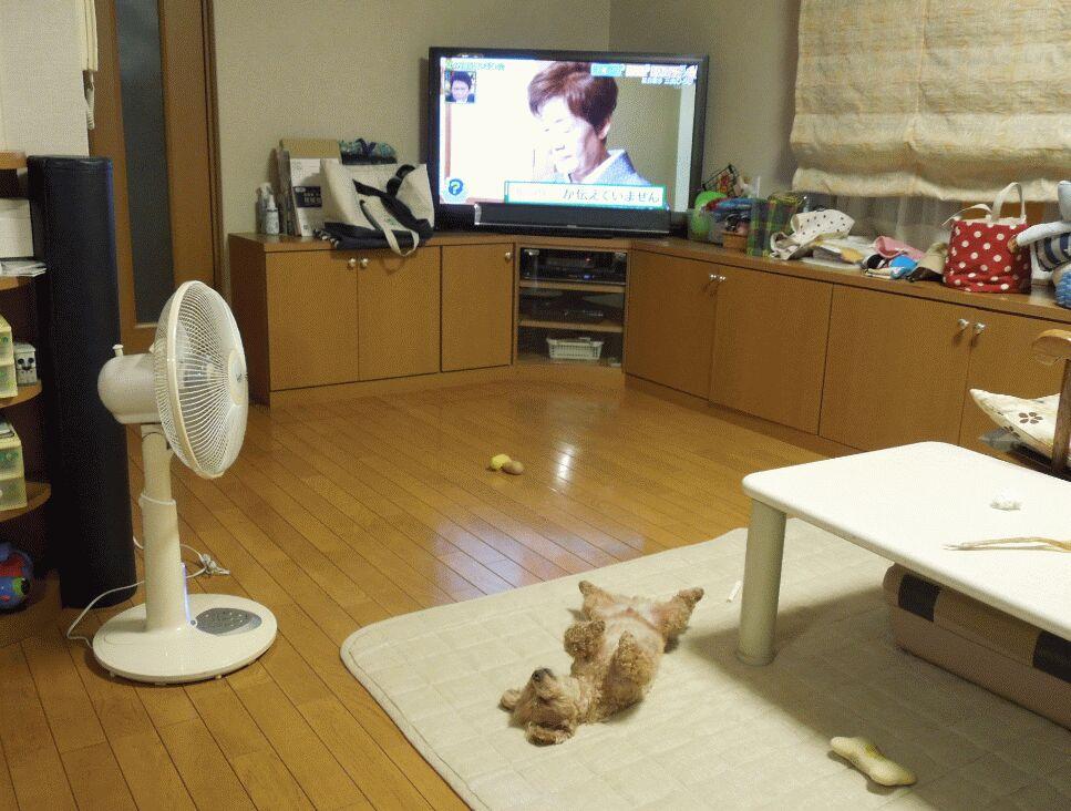 f:id:Ikegamiblog_tokyo:20190830092818j:plain