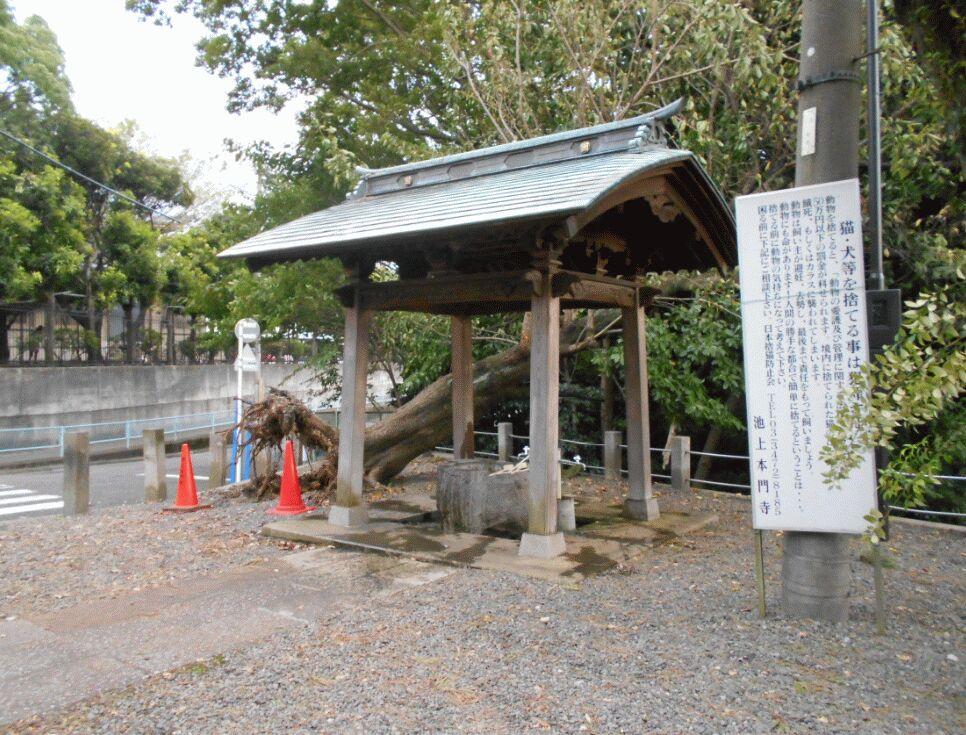 f:id:Ikegamiblog_tokyo:20190915140240j:plain