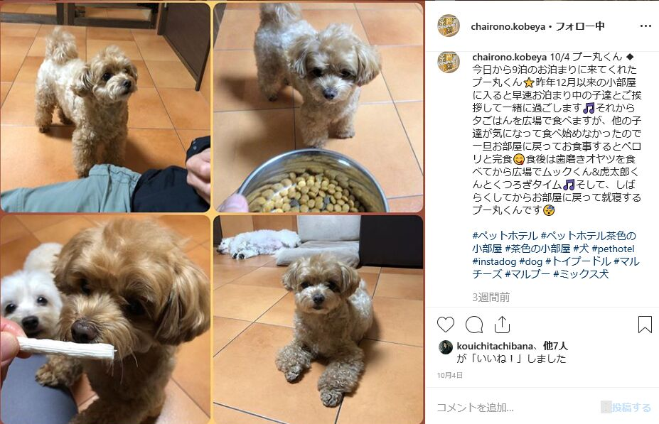 f:id:Ikegamiblog_tokyo:20191026195958j:plain
