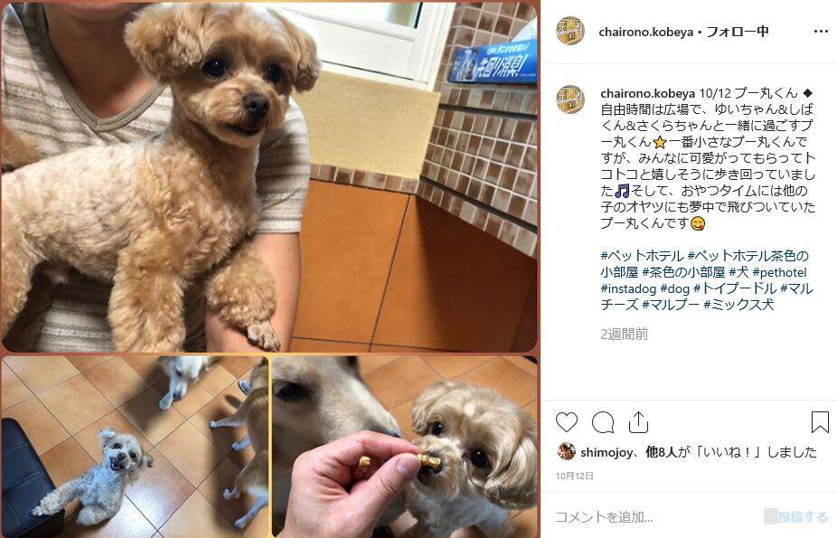 f:id:Ikegamiblog_tokyo:20191026200017j:plain