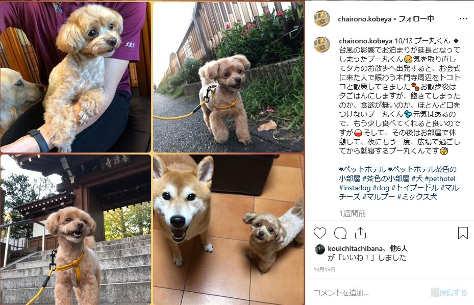 f:id:Ikegamiblog_tokyo:20191026200036j:plain