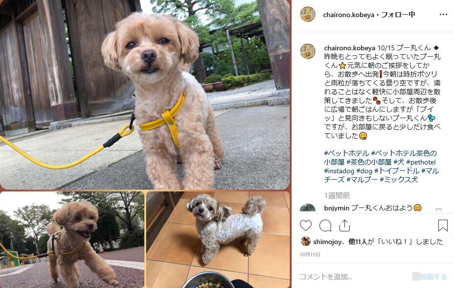 f:id:Ikegamiblog_tokyo:20191026200052j:plain