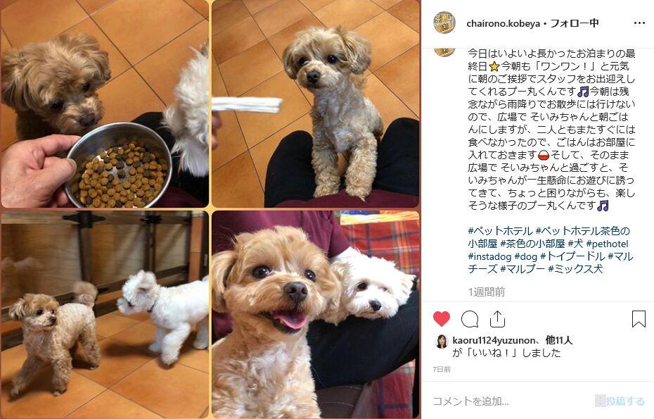 f:id:Ikegamiblog_tokyo:20191026200135j:plain