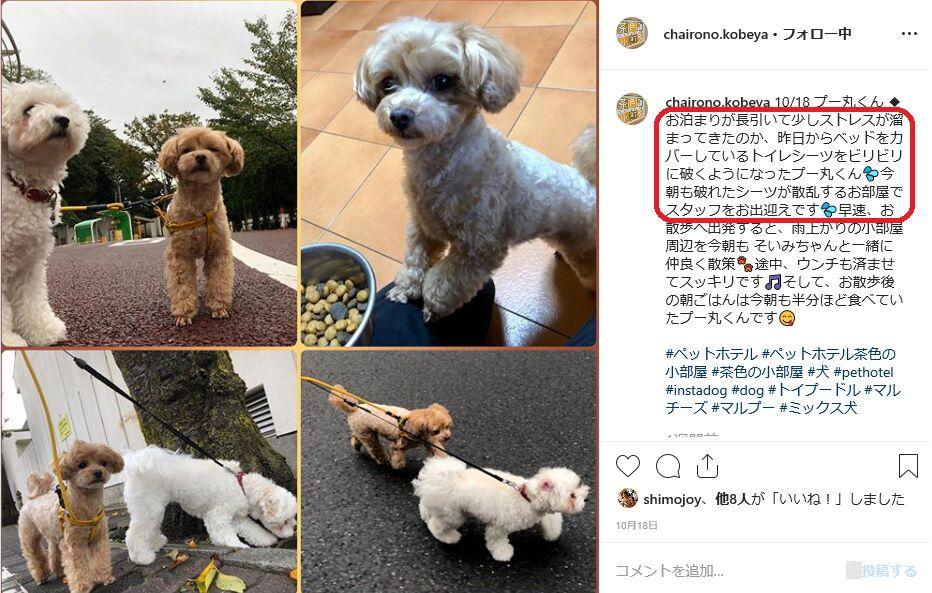 f:id:Ikegamiblog_tokyo:20191026203658j:plain