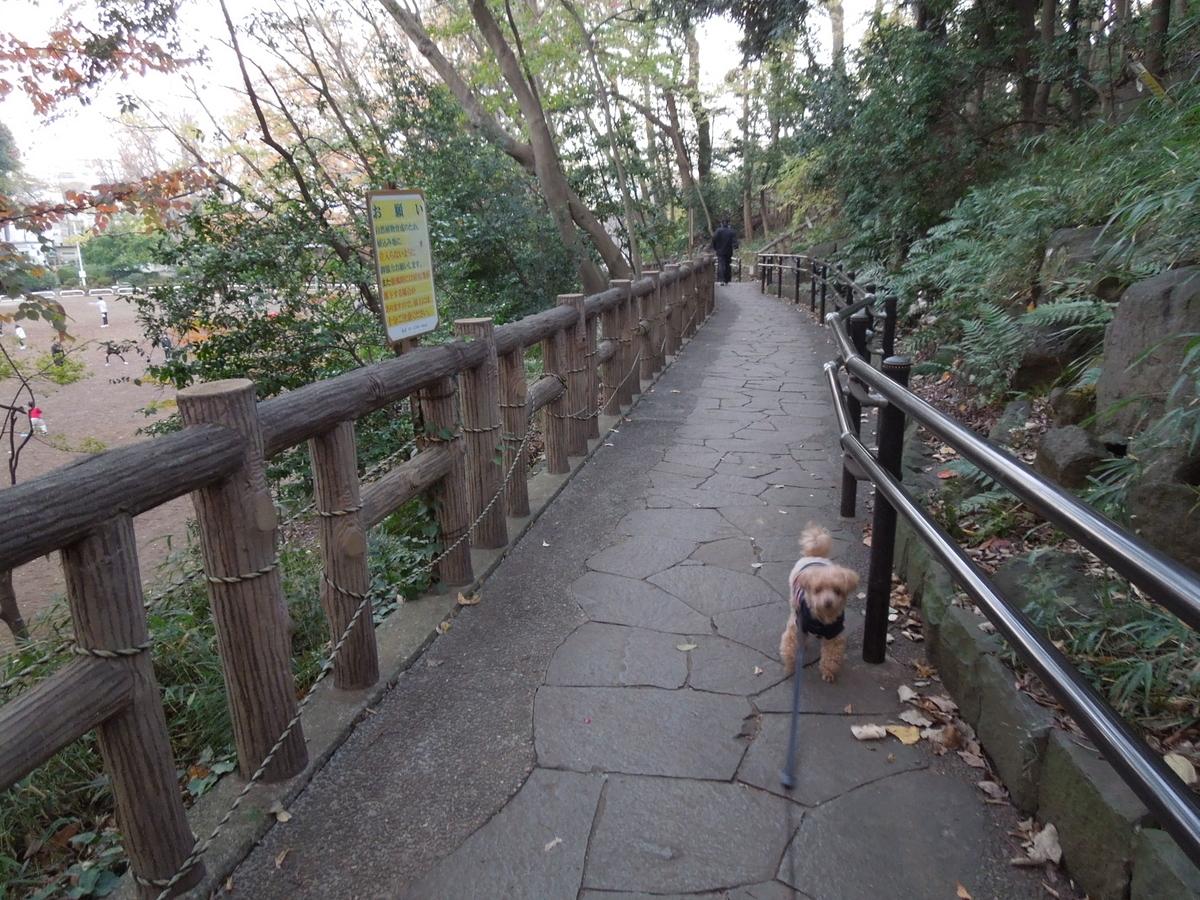 f:id:Ikegamiblog_tokyo:20191209173955j:plain