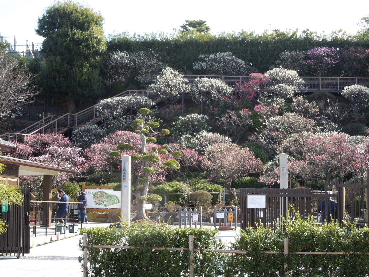 f:id:Ikegamiblog_tokyo:20200221190059j:plain