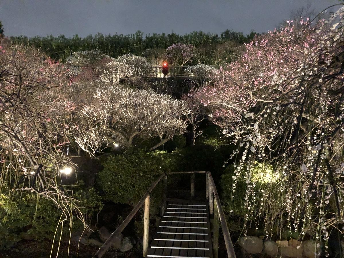f:id:Ikegamiblog_tokyo:20200224210435j:plain