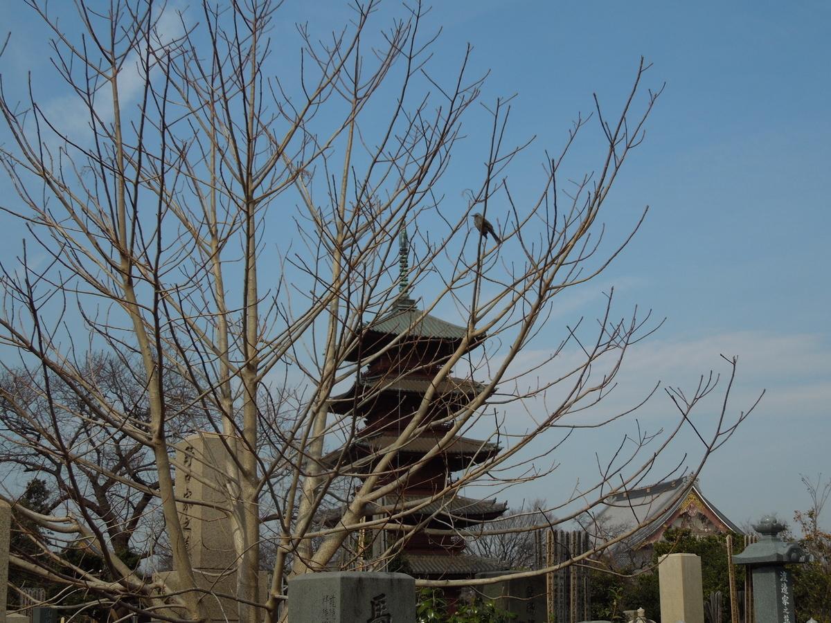 f:id:Ikegamiblog_tokyo:20200226152526j:plain