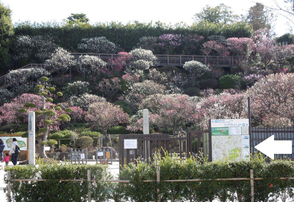 f:id:Ikegamiblog_tokyo:20200304124046j:plain