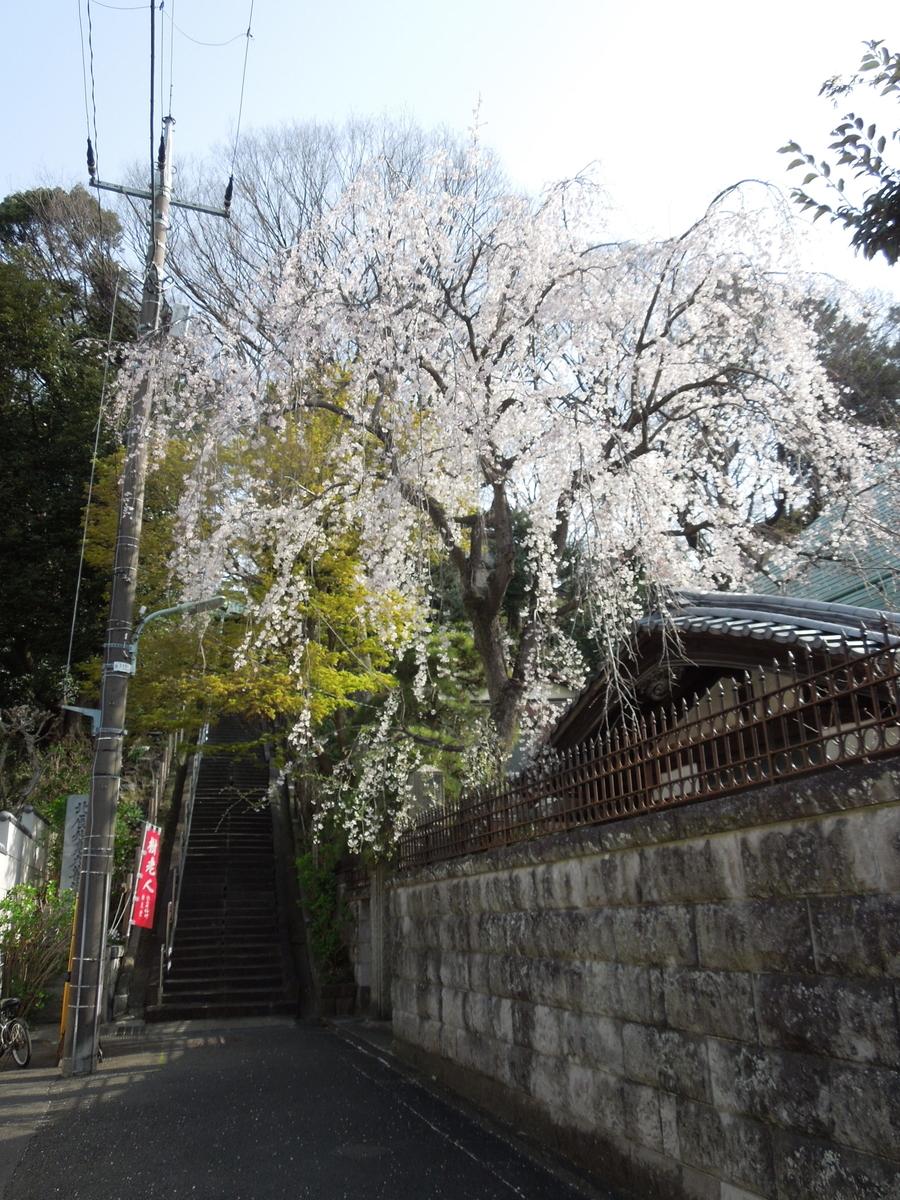 f:id:Ikegamiblog_tokyo:20200324150925j:plain