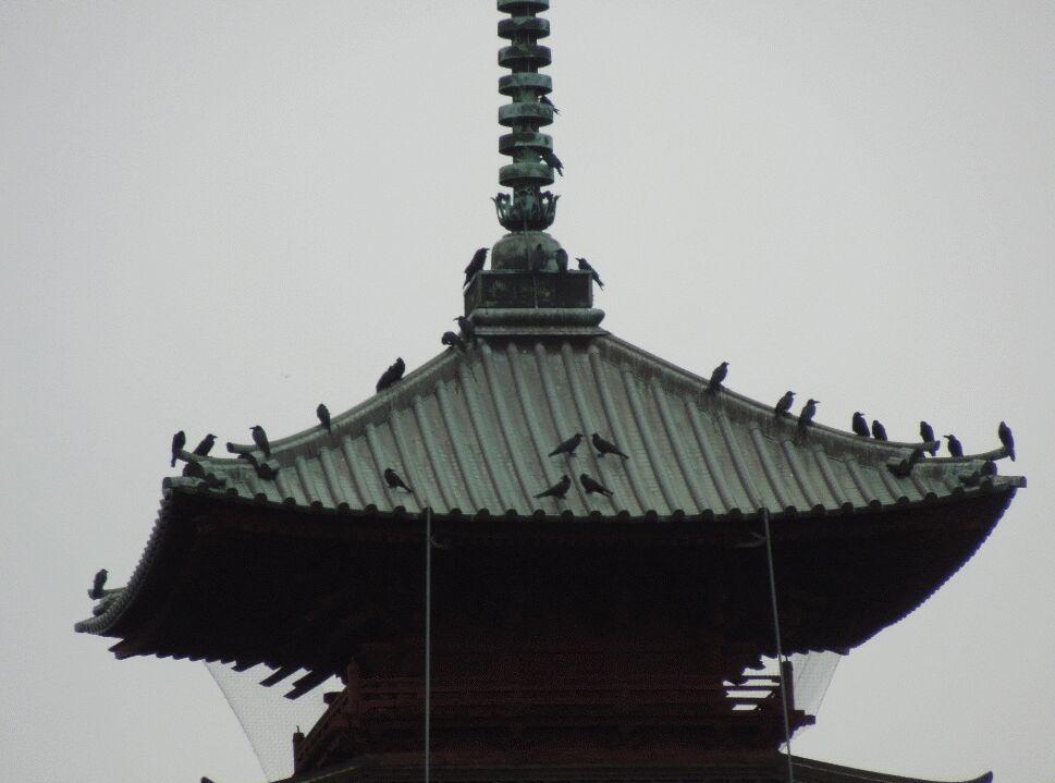 f:id:Ikegamiblog_tokyo:20200404114059j:plain