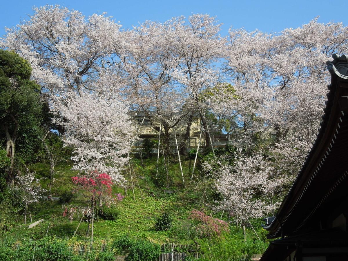 f:id:Ikegamiblog_tokyo:20200404133647j:plain