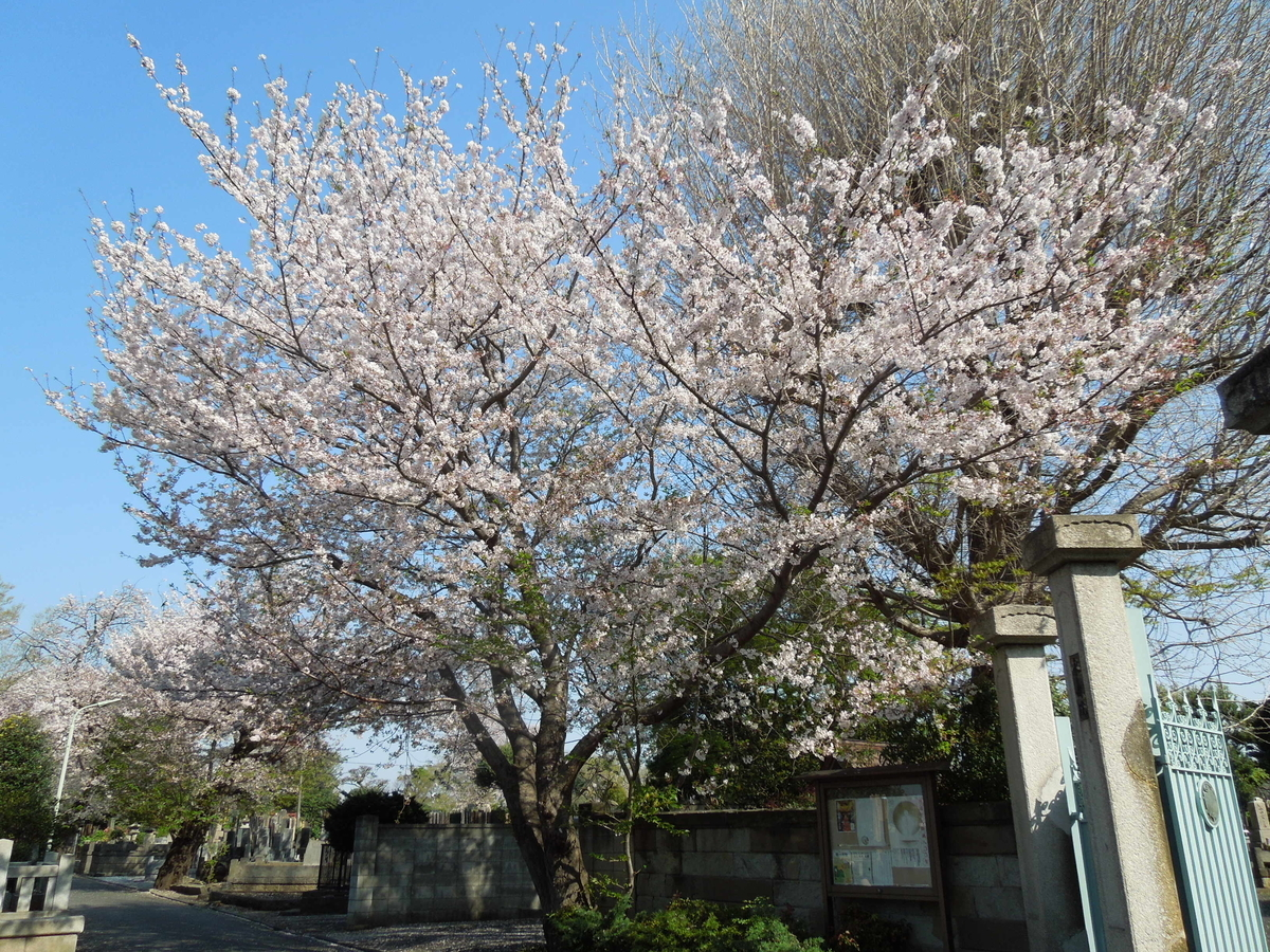 f:id:Ikegamiblog_tokyo:20200404202326j:plain