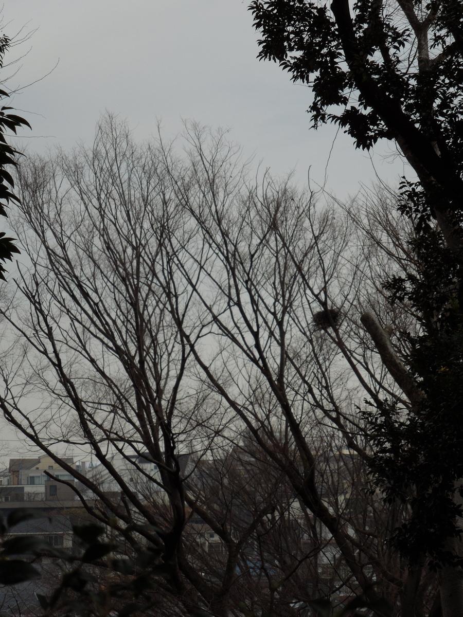 f:id:Ikegamiblog_tokyo:20200414192601j:plain