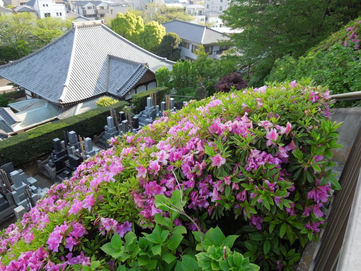 f:id:Ikegamiblog_tokyo:20200508223444j:plain