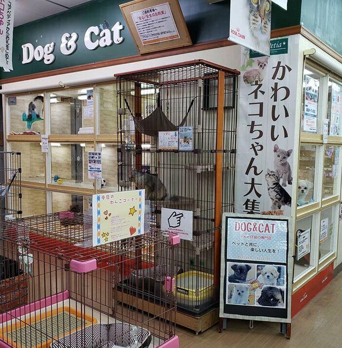 f:id:Ikegamiblog_tokyo:20200614225127j:plain