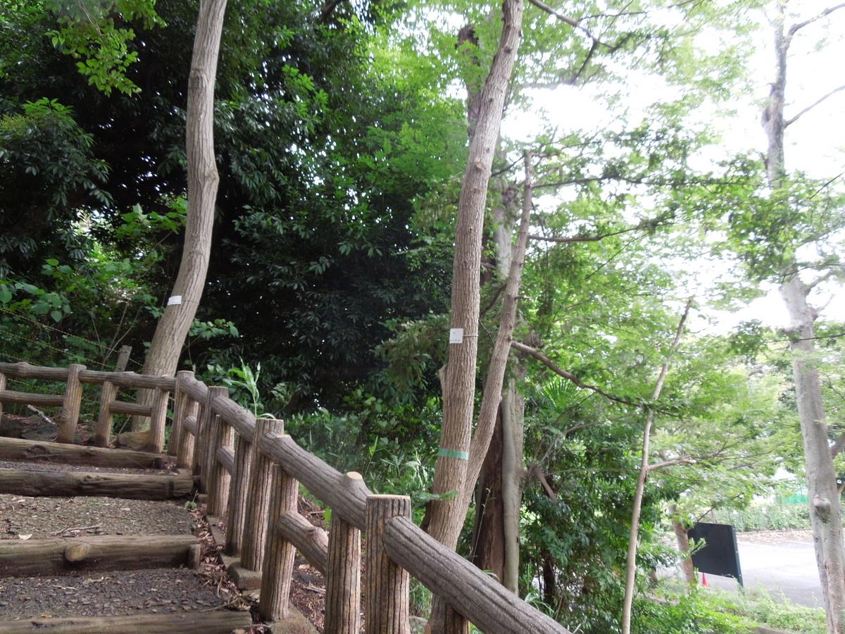 f:id:Ikegamiblog_tokyo:20200701164640j:plain
