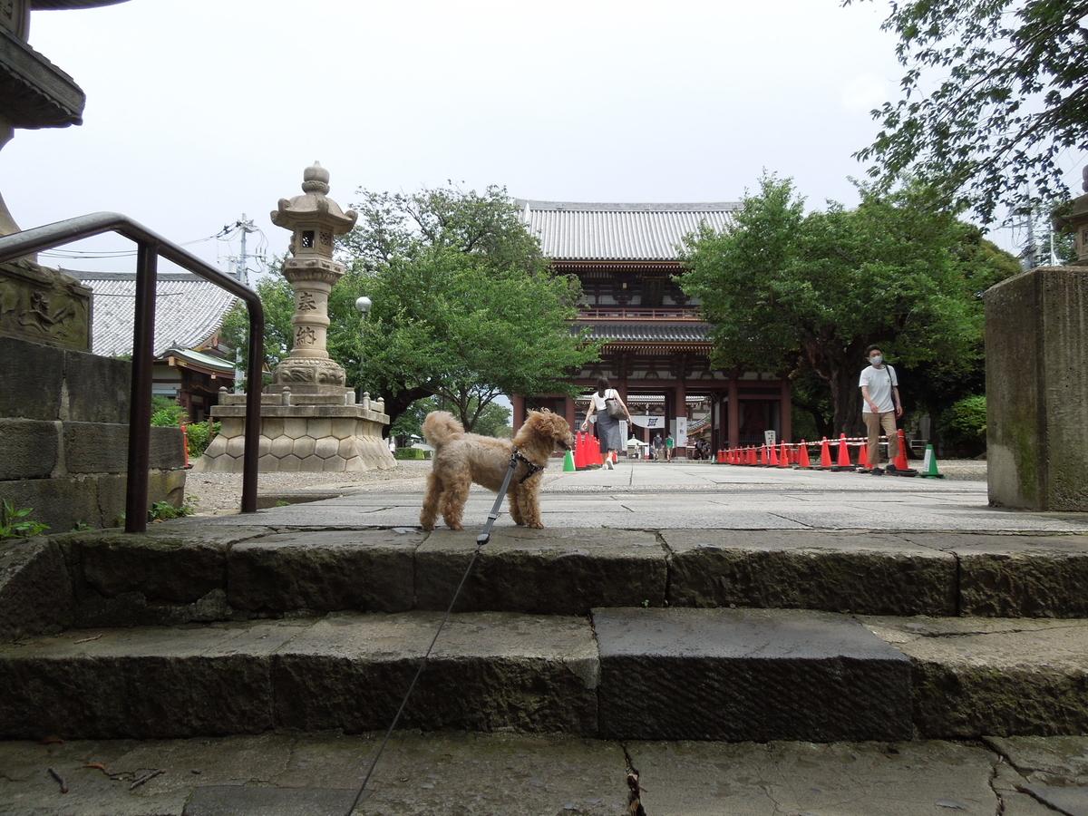 f:id:Ikegamiblog_tokyo:20200711212013j:plain