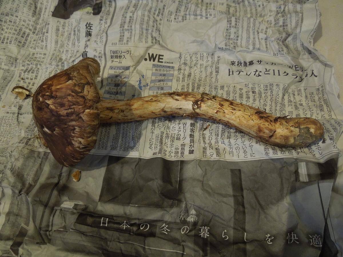 f:id:Ikegamiblog_tokyo:20201025211414j:plain