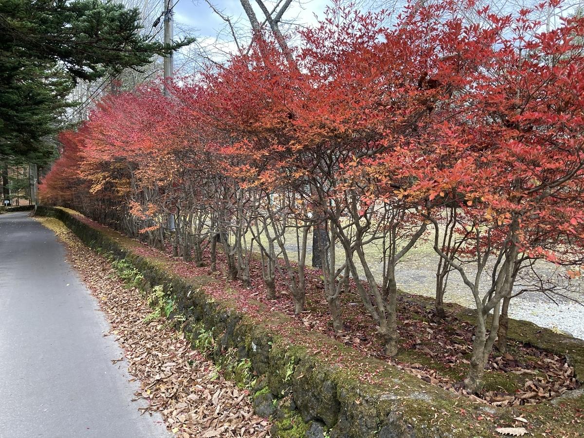 f:id:Ikegamiblog_tokyo:20201107153334j:plain