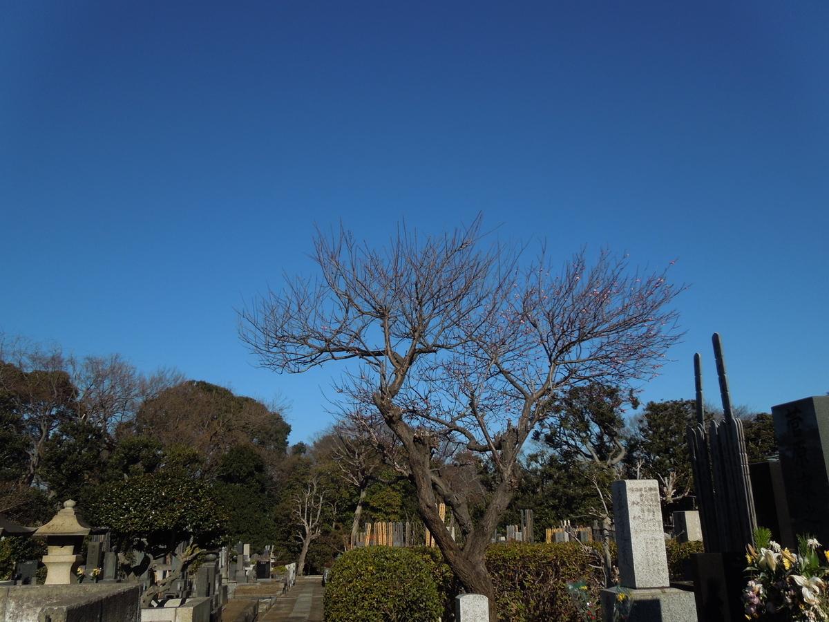 f:id:Ikegamiblog_tokyo:20210113205515j:plain