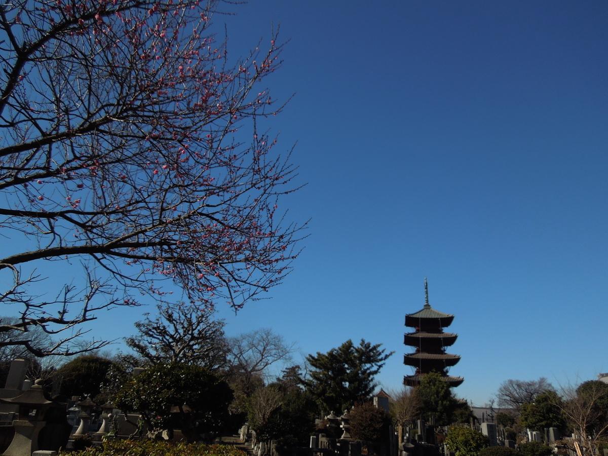 f:id:Ikegamiblog_tokyo:20210113205647j:plain