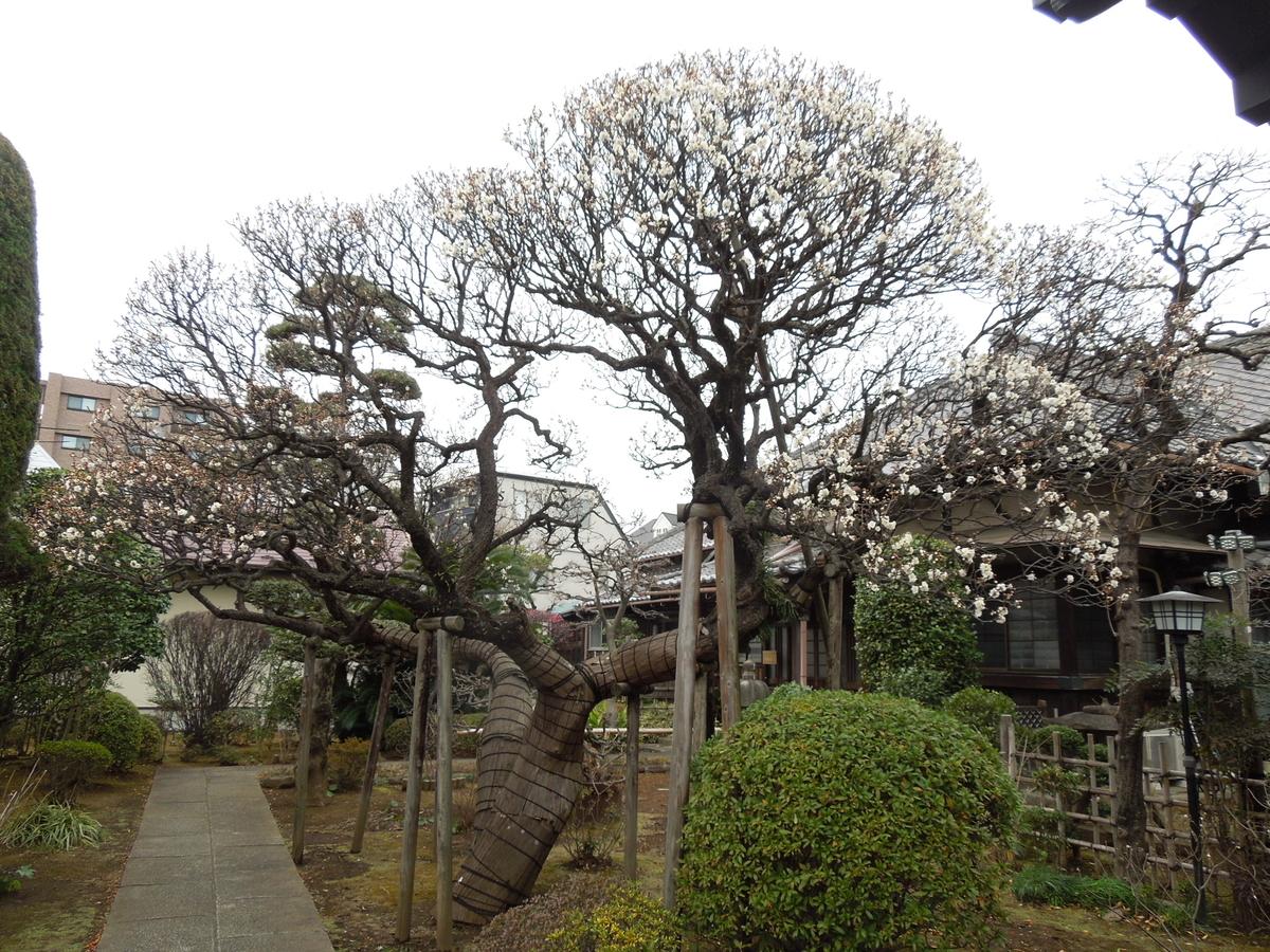 f:id:Ikegamiblog_tokyo:20210128130424j:plain