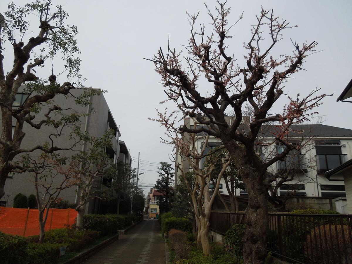 f:id:Ikegamiblog_tokyo:20210305115049j:plain