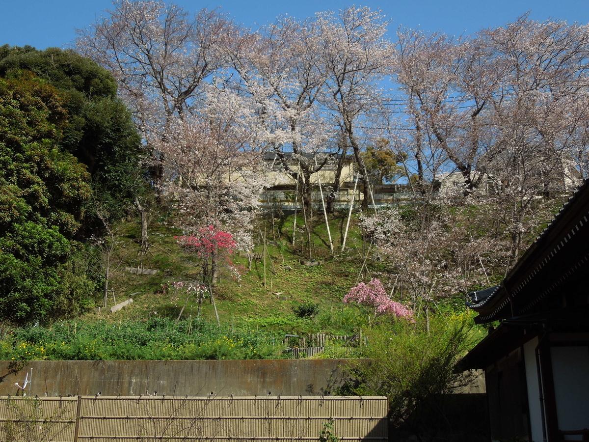 f:id:Ikegamiblog_tokyo:20210327210015j:plain