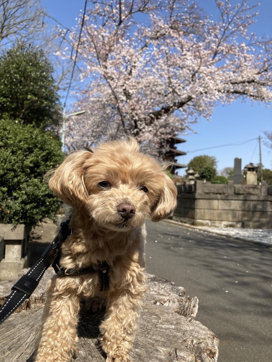 f:id:Ikegamiblog_tokyo:20210329223016j:plain