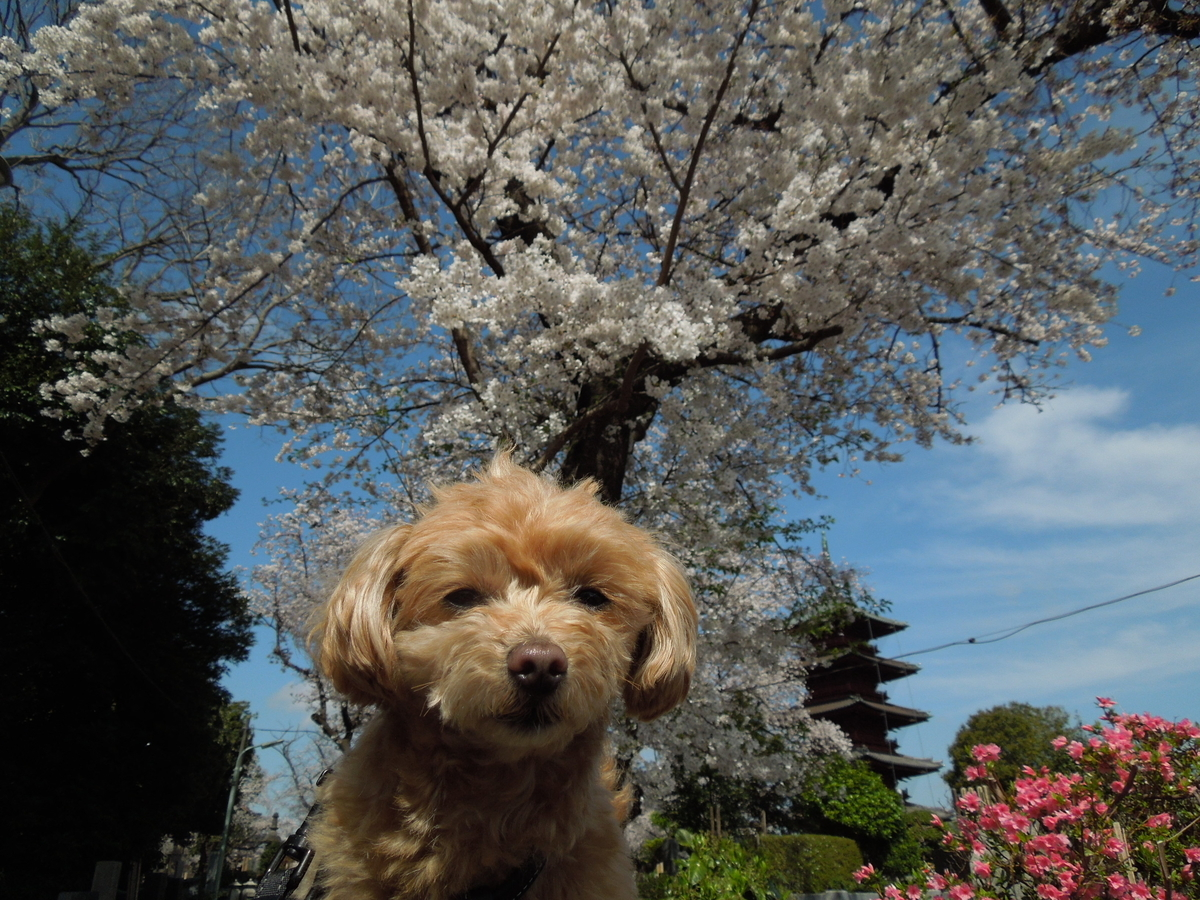 f:id:Ikegamiblog_tokyo:20210329223401j:plain