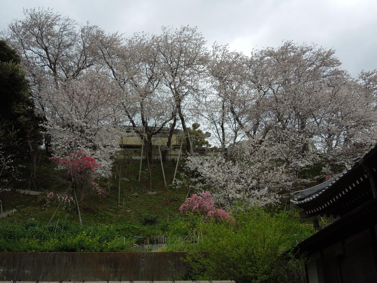 f:id:Ikegamiblog_tokyo:20210405223749j:plain
