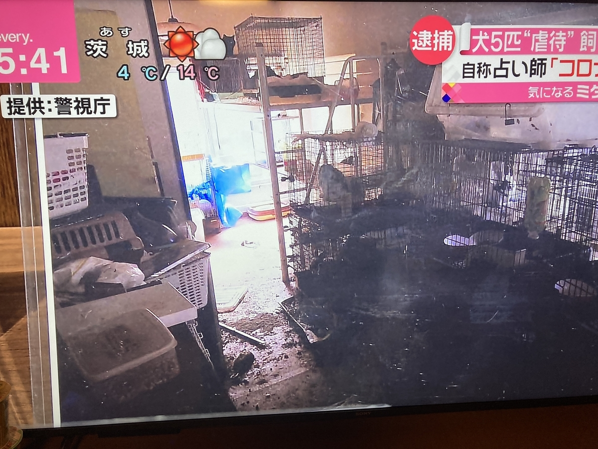 f:id:Ikegamiblog_tokyo:20210427215049j:plain