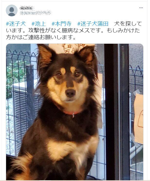 f:id:Ikegamiblog_tokyo:20210605203229j:plain