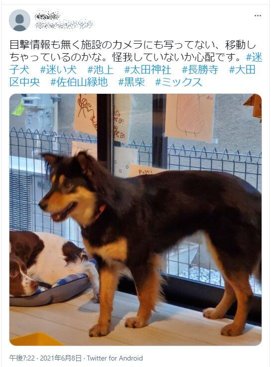 f:id:Ikegamiblog_tokyo:20210608213533j:plain