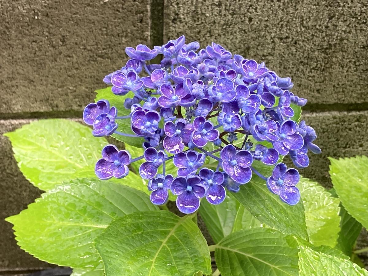 f:id:Ikegamiblog_tokyo:20210614184759j:plain