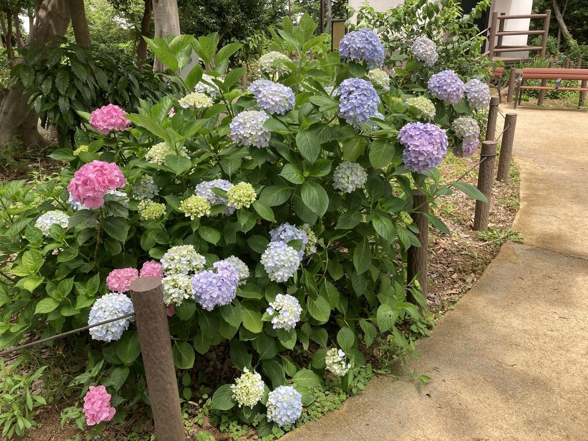 f:id:Ikegamiblog_tokyo:20210614184857j:plain