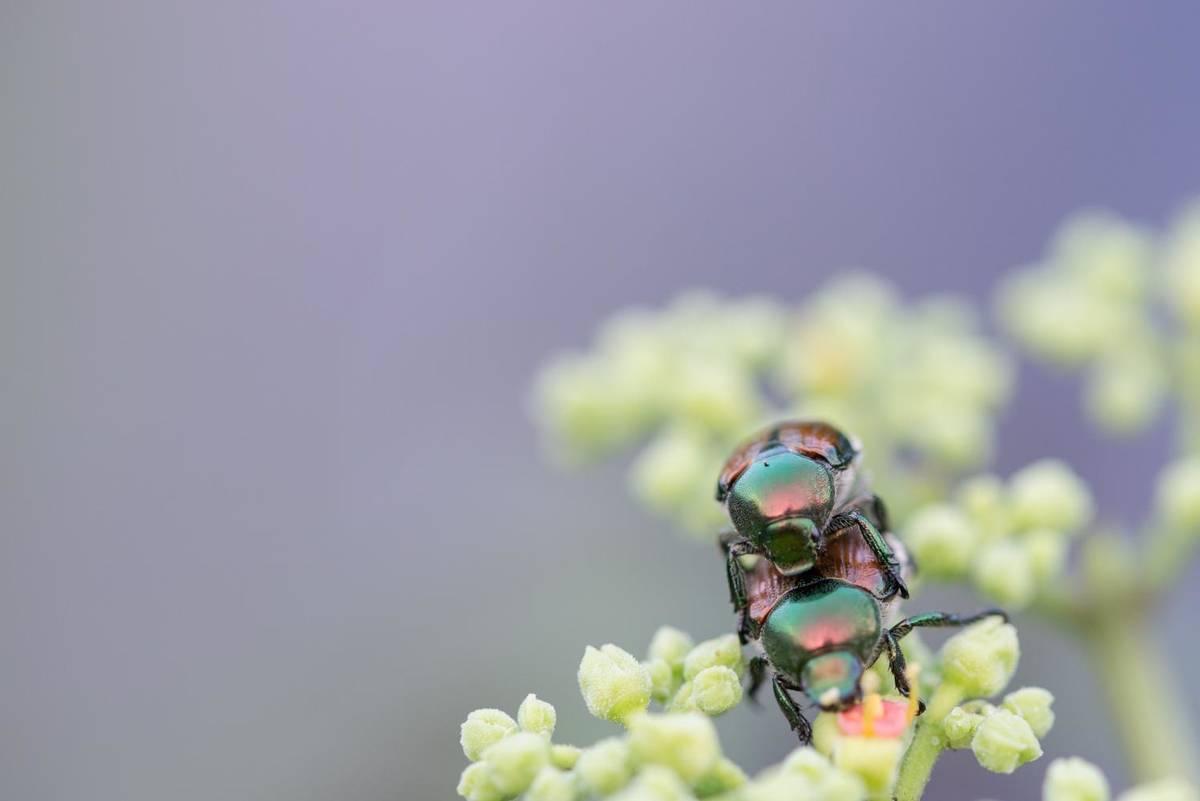 f:id:Insectcamera:20190724182932j:plain