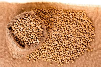 ソイプロテイン大豆