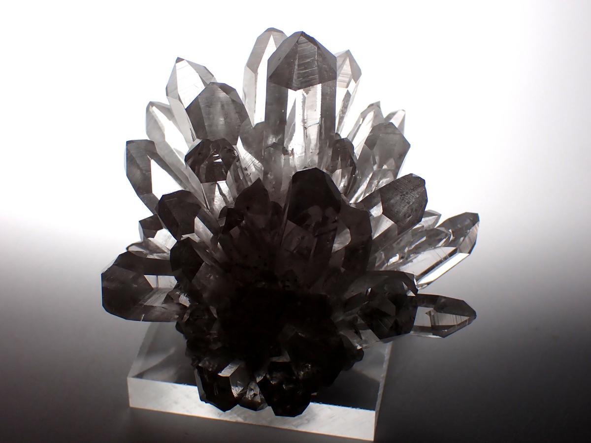 f:id:InzaiFossil:20210520112921j:plain